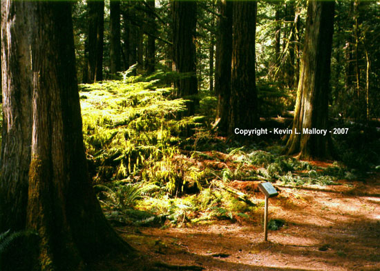 2 - The Entrance to Cathedral Grove - Vancouver Island, BC