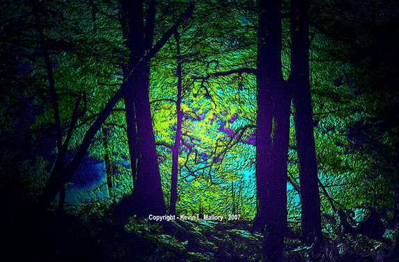 57 - Moonlight ShiningThrough the Forest - Algonquin Park