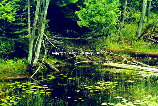 29 - The Peace and Quiet of the Forest Stream - near Black MacDonald Lake, Ont