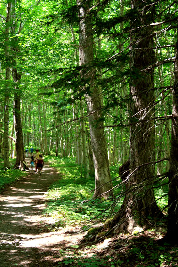 27 - The Old Growth Hardwood Forest Trail - Cape Breton