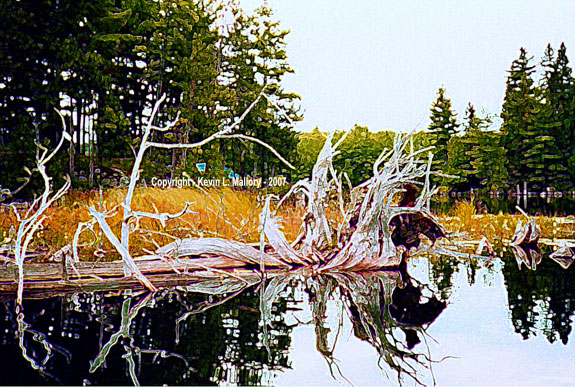 58 - The Enchanting Driftwood - Mile Lake, Ont