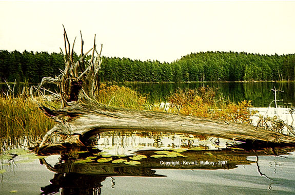 60 - Old Grandfather Driftwood - Mile Lake, Ont