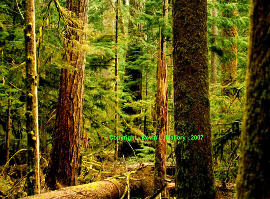 5 - In the Heart of the Old Growth Forest of Cathedral Grove - Vancouver Island, BC