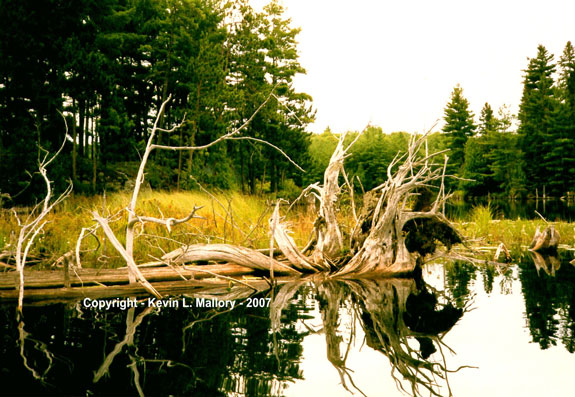 8 - Driftwood Rhapsody at the Lake's Edge - Mile Lake, Ontario
