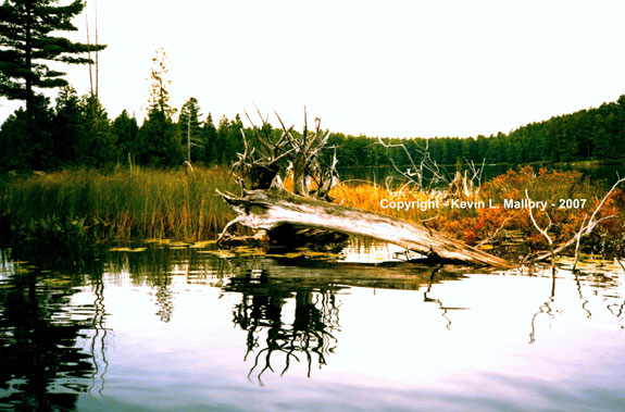 9 - The Ancient Driftwood - Mile Lake, Ontario