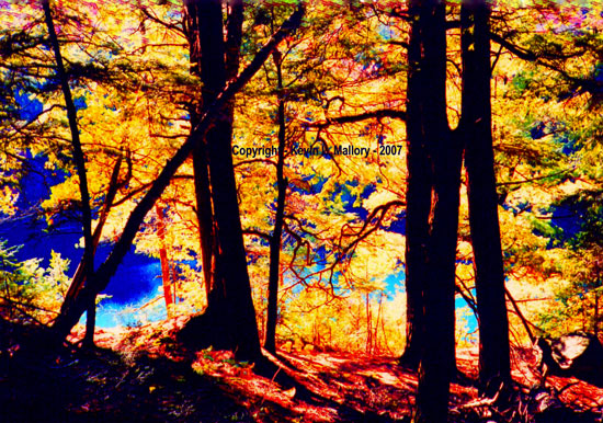 8 - Autumn Light in the Hardwood Forest - Algonquin Park