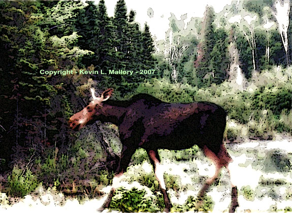 53 - A Female Moose in the Misty Woods of Algonquin Park